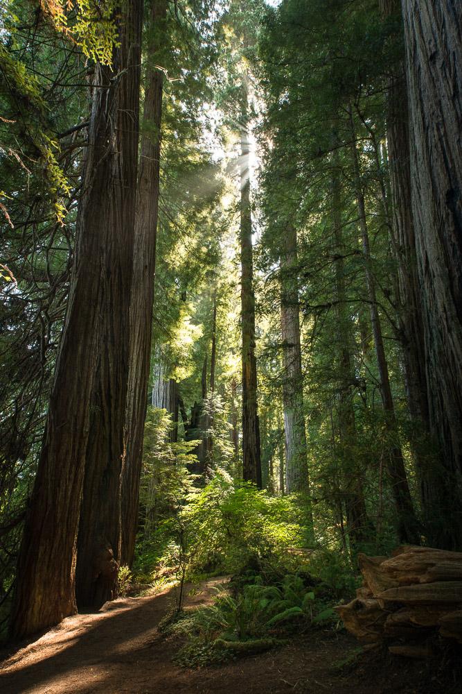 Redwoods-97.jpg