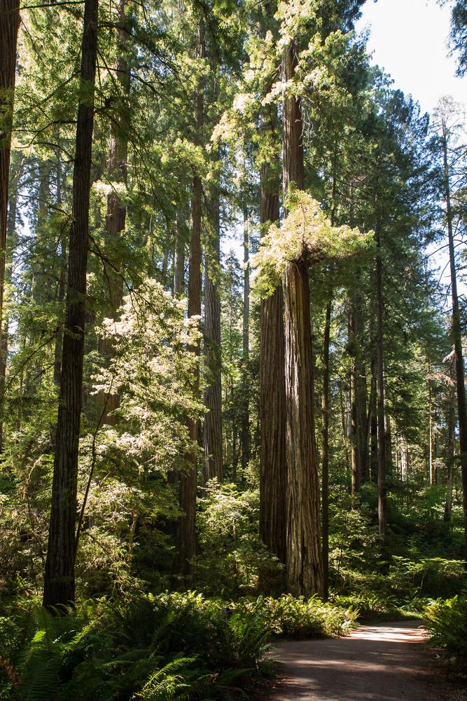 Redwoods-151.jpg