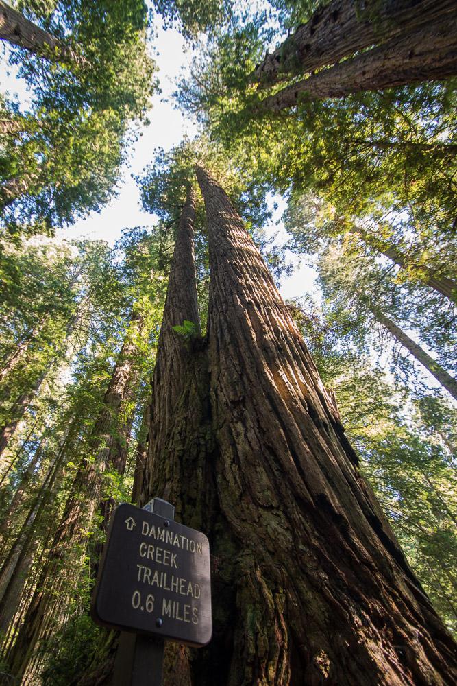 Redwoods-232.jpg