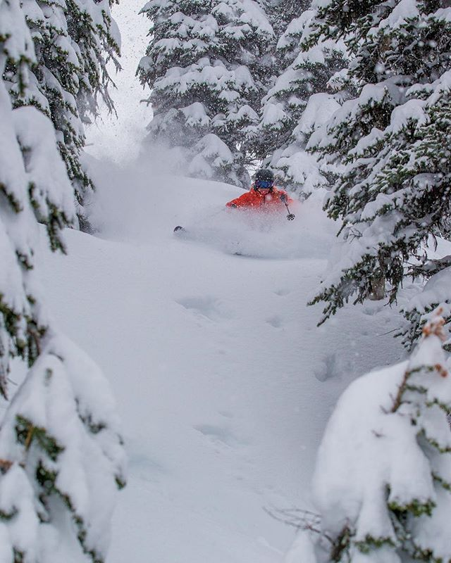 Surprise pow is my favourite pow. This winter just keeps on giving! So glad to be healthy and have so many friends to share it with. 💕📸: @richardhallman_photo • • • • #lifewelllived #therealstoke #explorebc #winter #snow #powder #powdays #deepdays #adventure #ski #skiing #happy #trees #hitcase