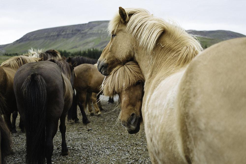 SaraKerens_Iceland-6745.jpg