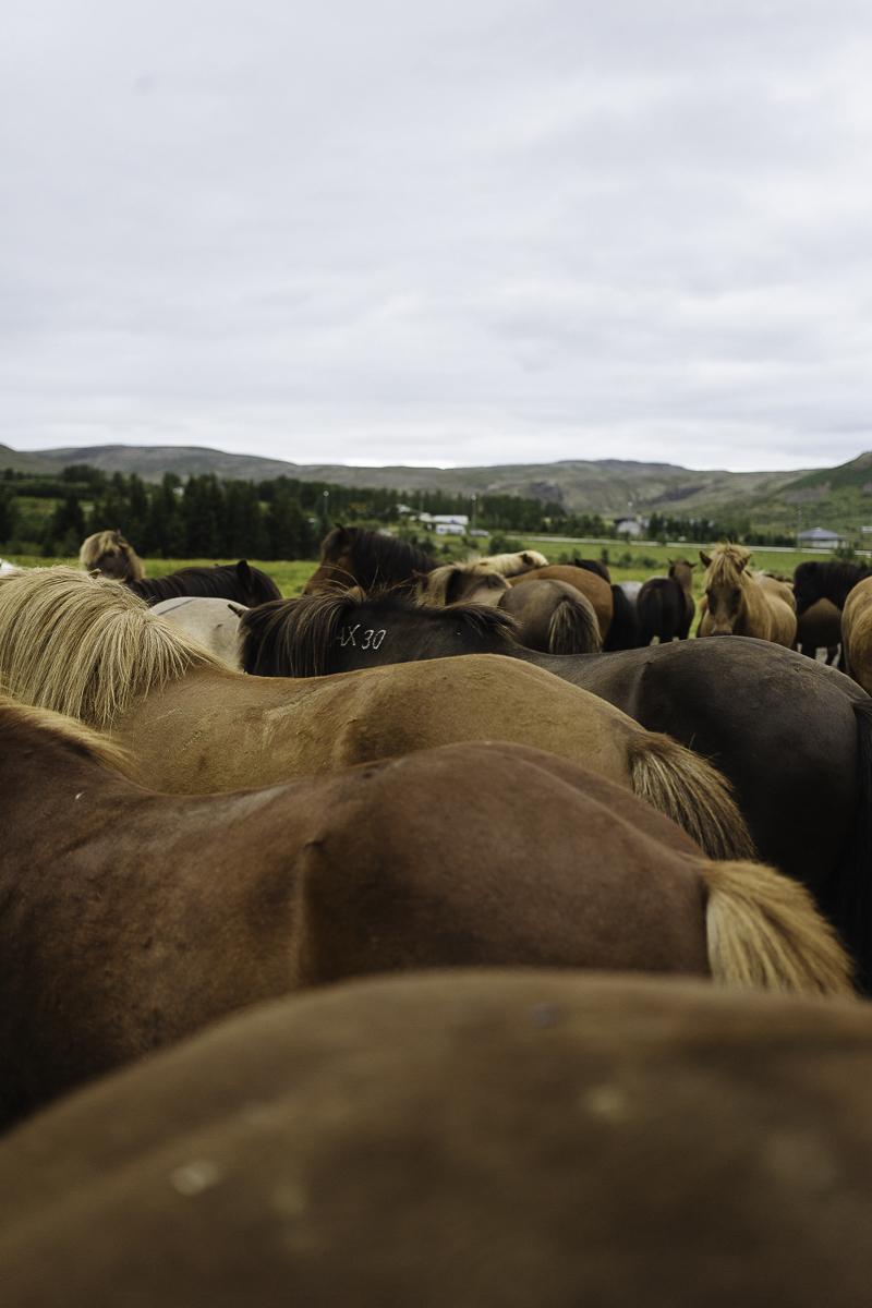 SaraKerens_Iceland-6704.jpg