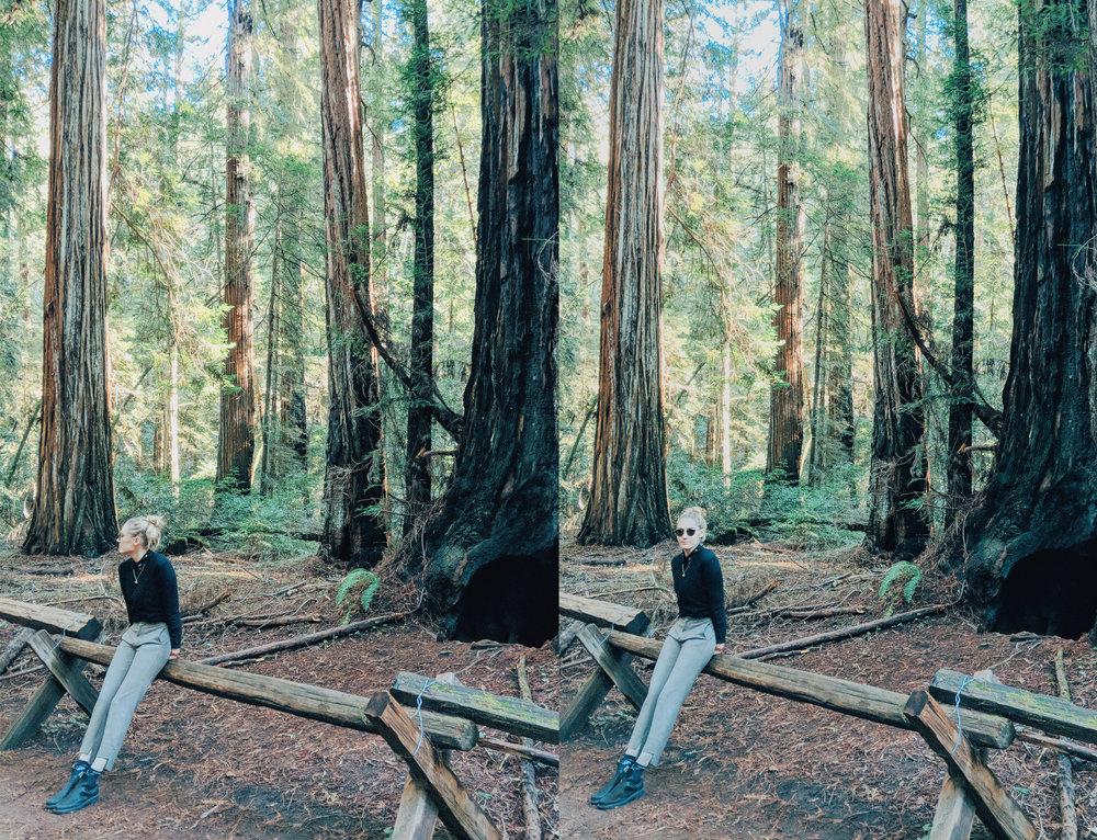 woods duo.jpg