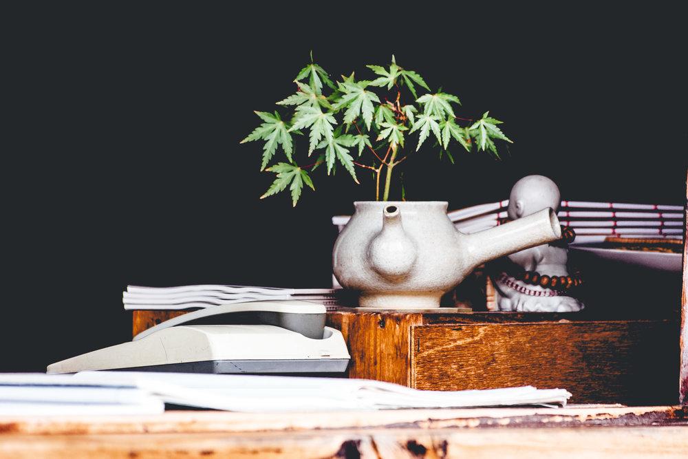 FLIP 'n Business of cannabis