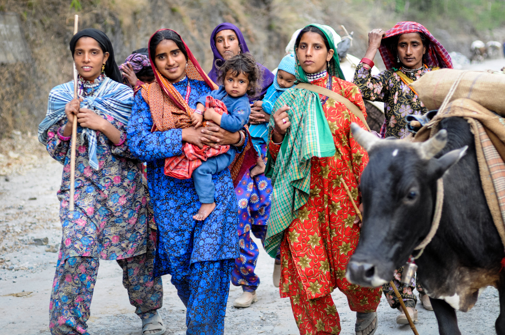 Women often lead the pack animals while men drive the buffaloes, but these gender roles are very flexible. Many jobs in Van Gujjar society are performed by men and women together.
