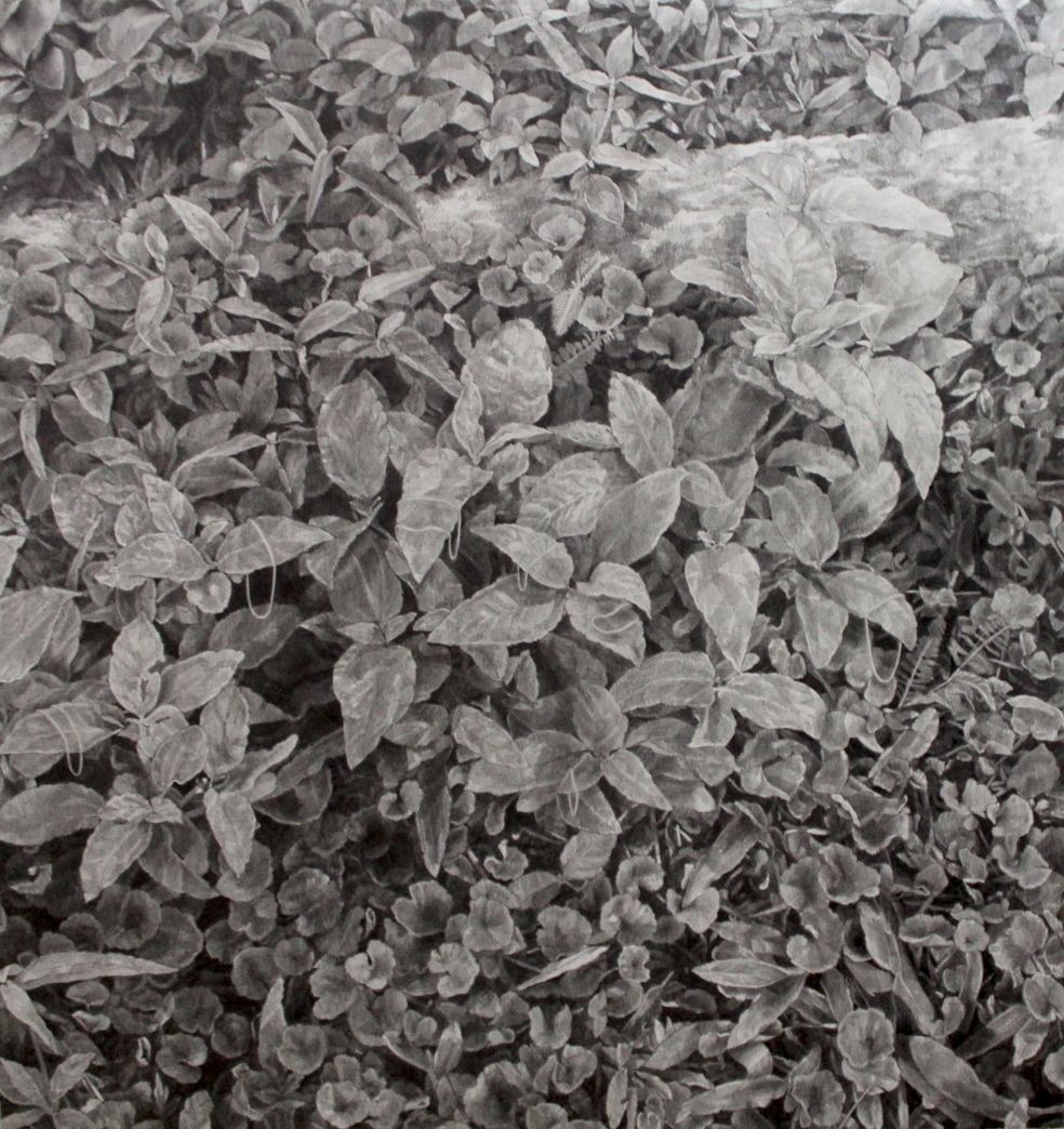 Ashley YEO  Post grieving (plants)  2013 Graphite on paper H60 x W56 cm