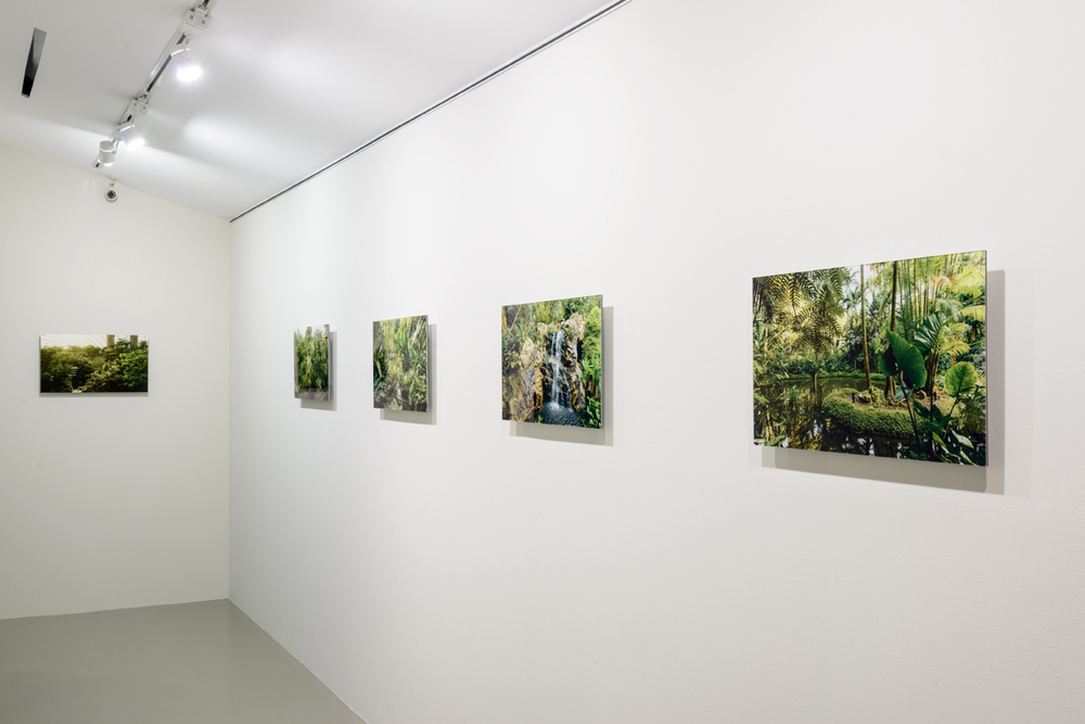 Installation View of  My Forest Has No Name , 2014-Ongoing Credit: Eric Tschernow, Jason Lau and John Yuen (Fotograffiti) Photo Credit: Fotograffiti (John Yuen)