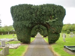 Ancient yew hedges at Hay Cemetery