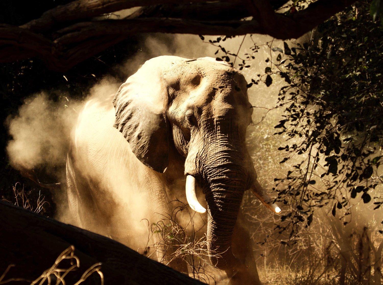 further activities — Tusk & Mane Safaris