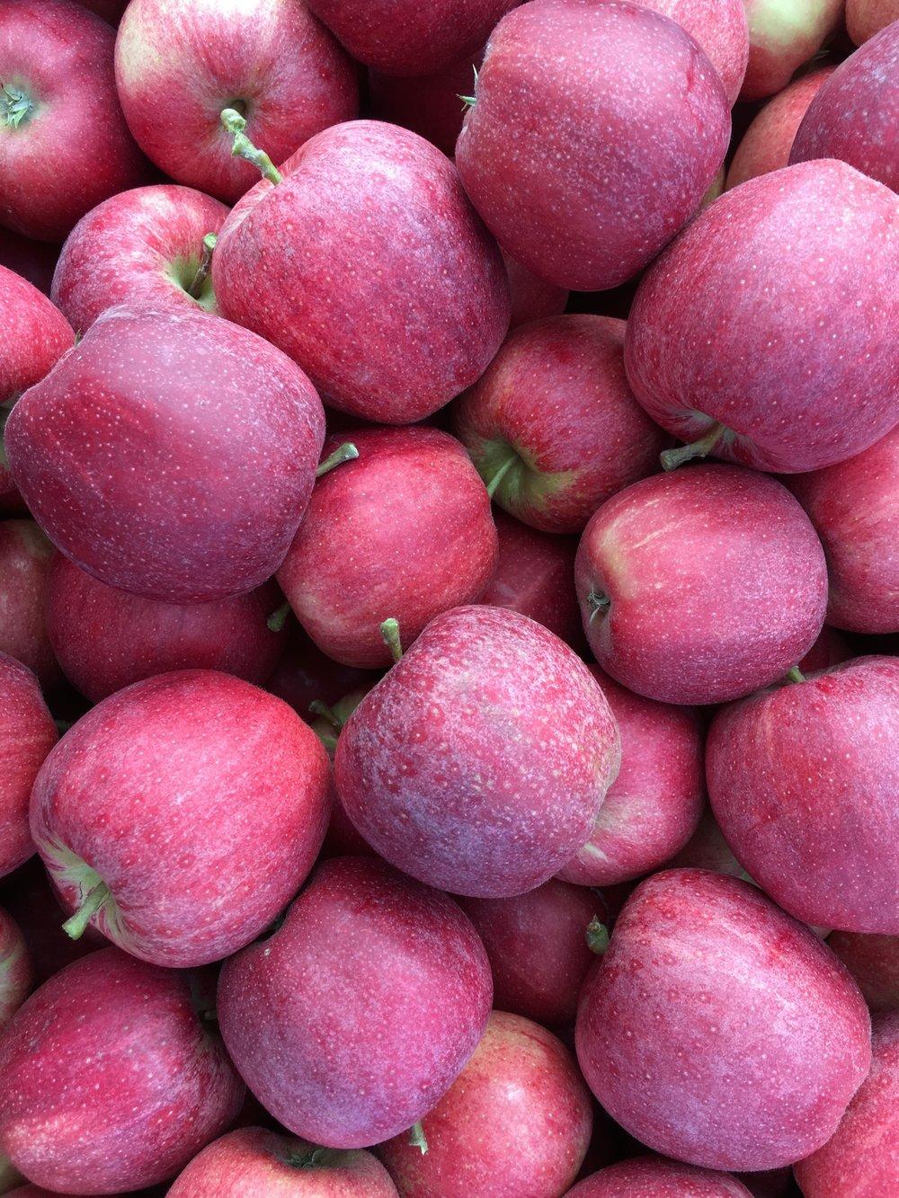 Äpfel vom Zimberihof