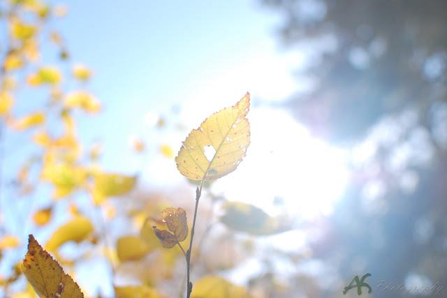 leafgold.jpg