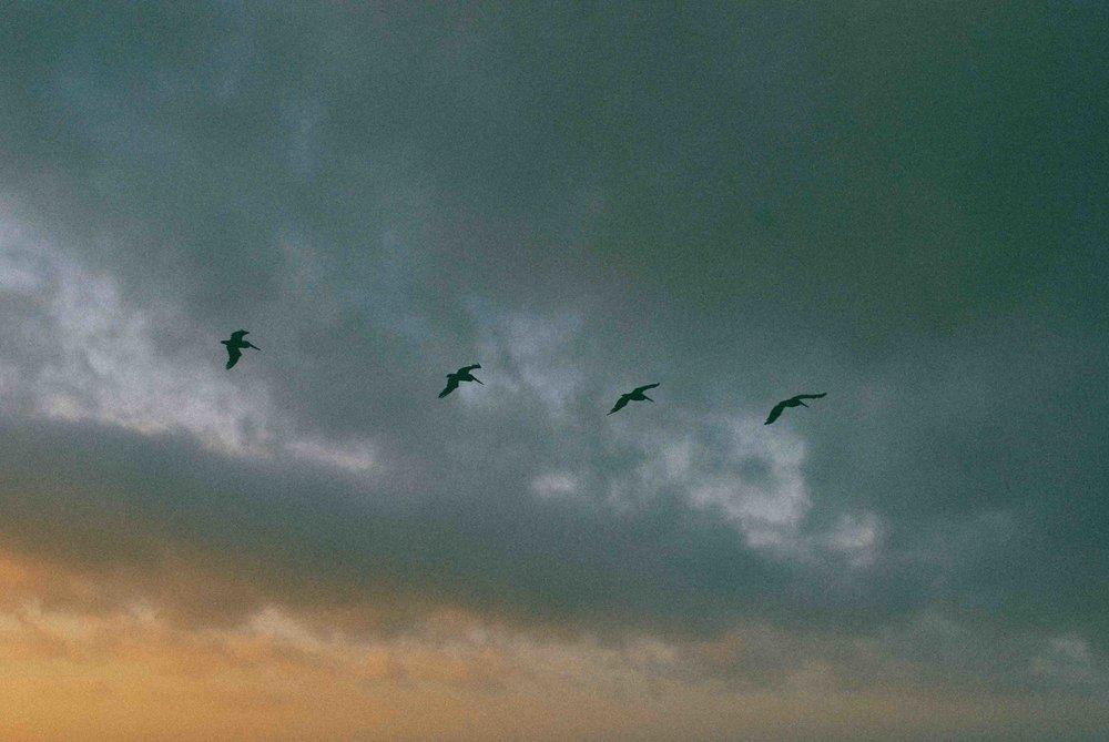 Cali31_SanFran_Sunset_BirdsWeb.jpg