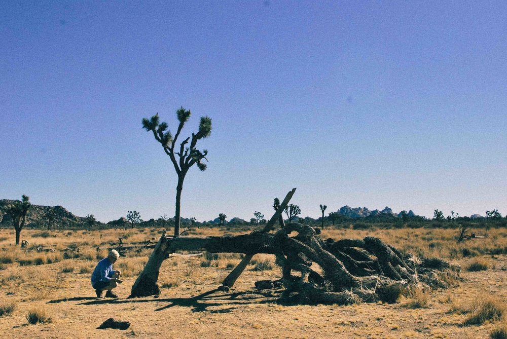 Cali45_Joshua_TreeWeb.jpg
