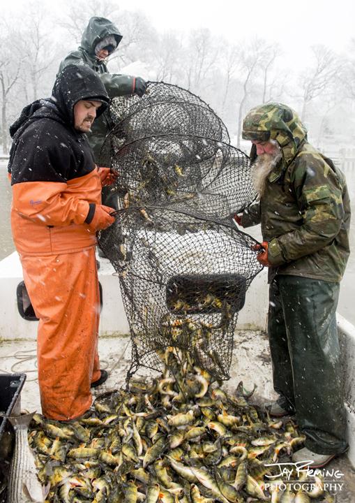 Fyke Netting for Yellow Perch. Bush River, Maryland