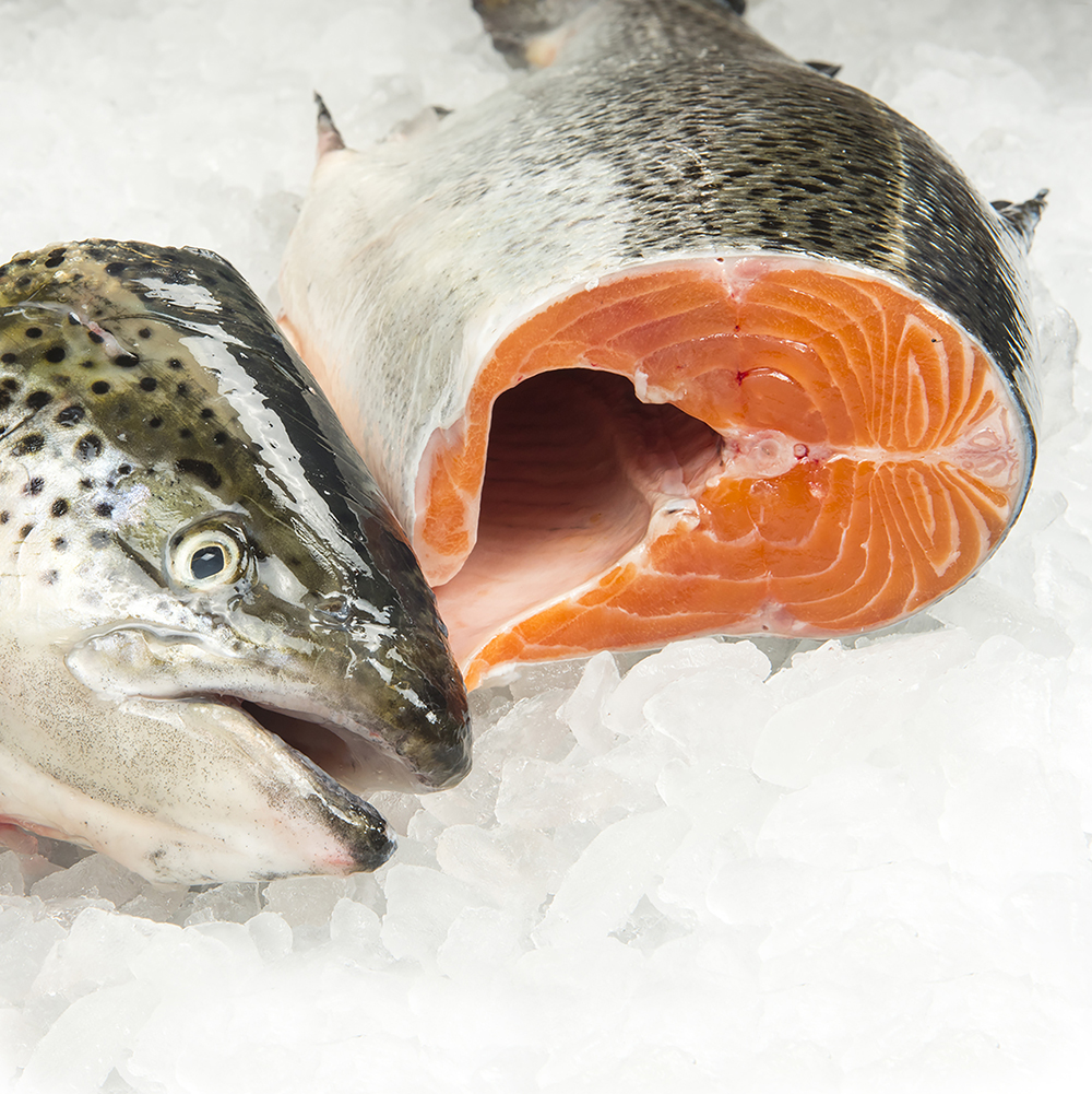 Farm Raised - Atlantic Salmon  02.jpg