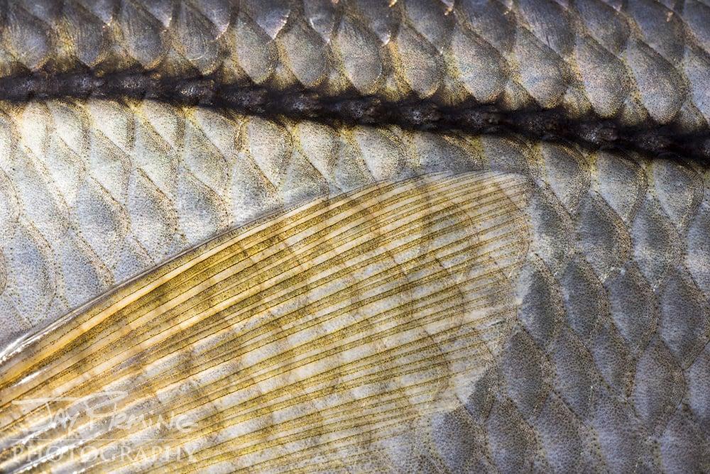 Pine Island, Florida Fish Macro -  © Jay Fleming  02.jpg