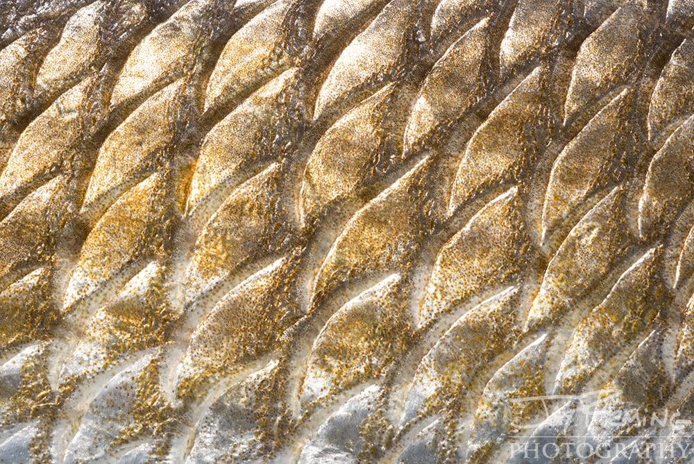 Pine Island, Florida Fish Macro -  © Jay Fleming  07.jpg