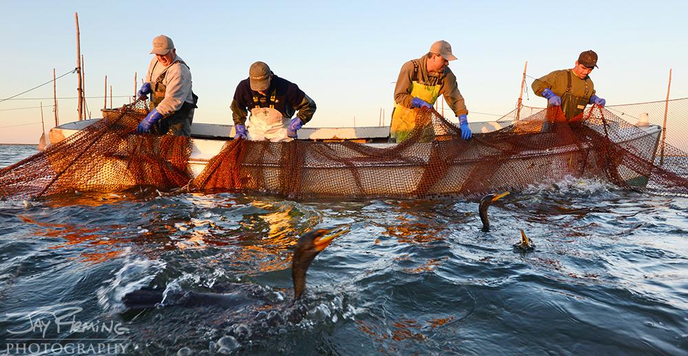 Chesapeake Bay Seafood@ Jay Fleming19.jpg