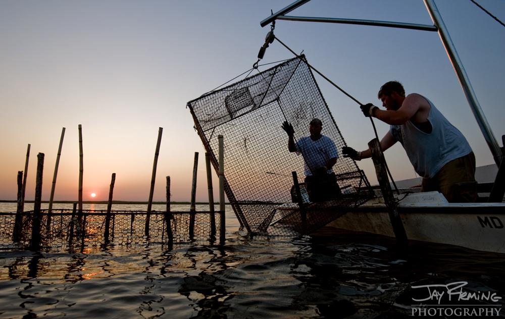 Chesapeake Bay Seafood@ Jay Fleming05.jpg