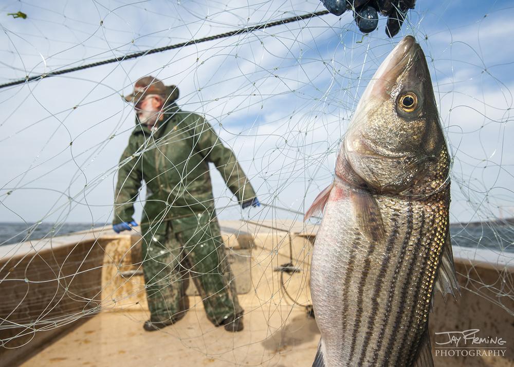 Chesapeake Bay Seafood@ Jay Fleming20.jpg