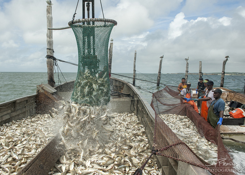 Chesapeake Bay Seafood@ Jay Fleming21.jpg