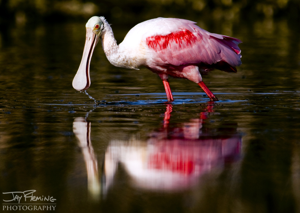Wildlife Portfolio © Jay Fleming 41.jpg