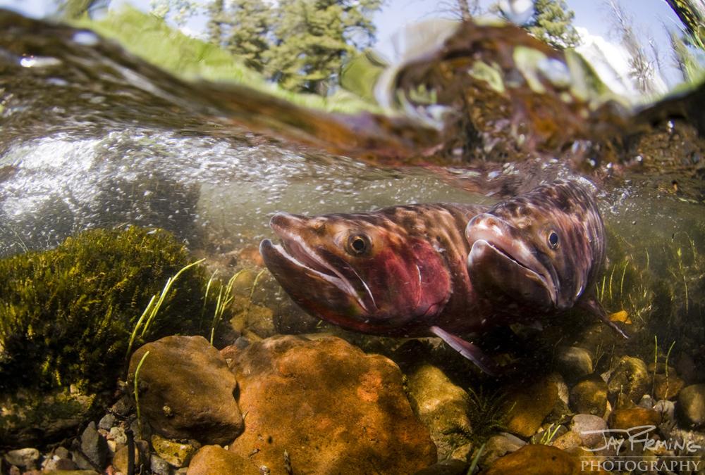 Yellowstone Portfolio © Jay Fleming 29.jpg