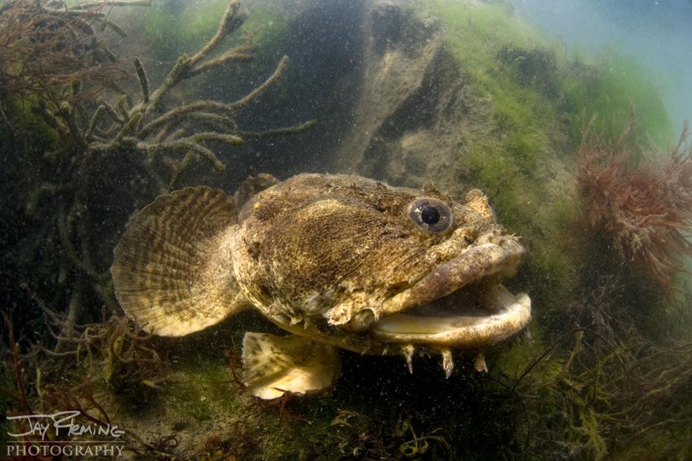 Underwater Portfolio © Jay Fleming 07.jpg