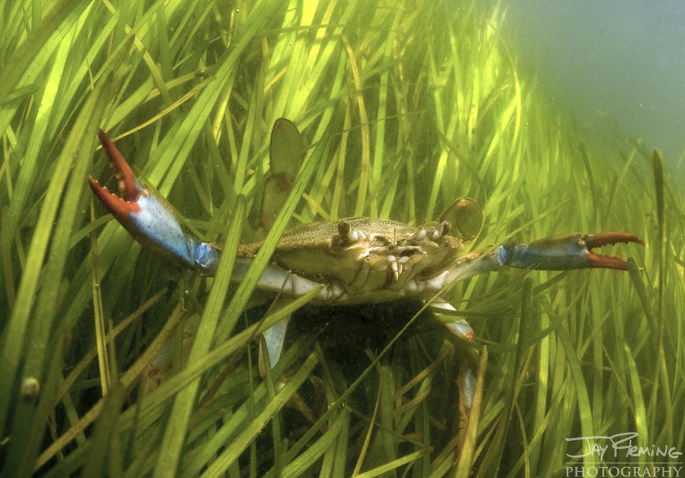 Underwater Portfolio © Jay Fleming 10.jpg