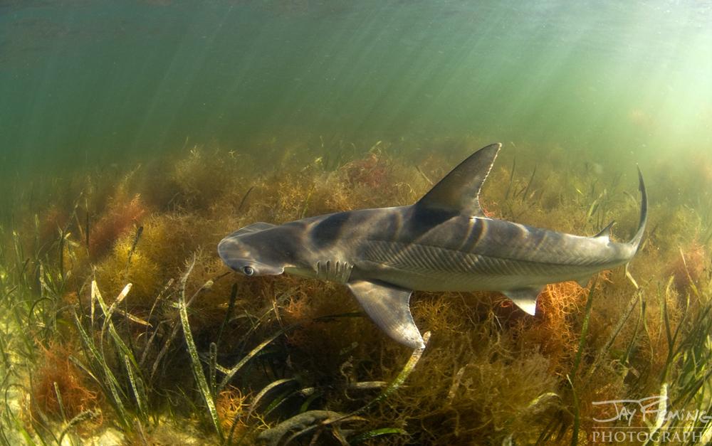 Underwater Portfolio © Jay Fleming 11.jpg