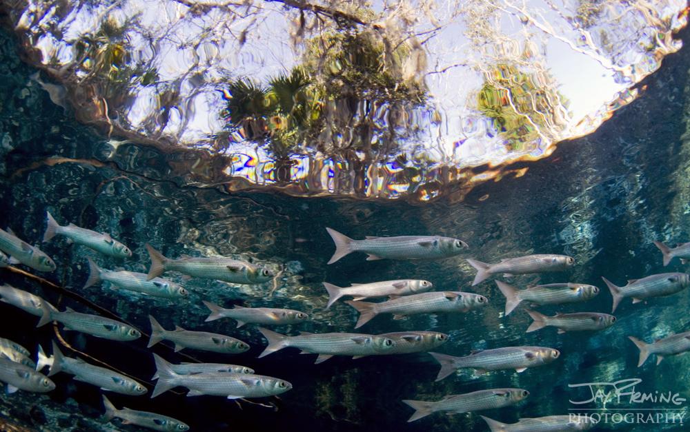 Underwater Portfolio © Jay Fleming 13.jpg