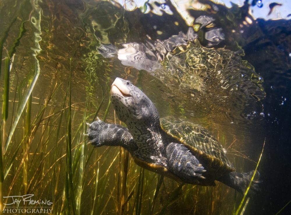 Underwater Portfolio © Jay Fleming 14.jpg