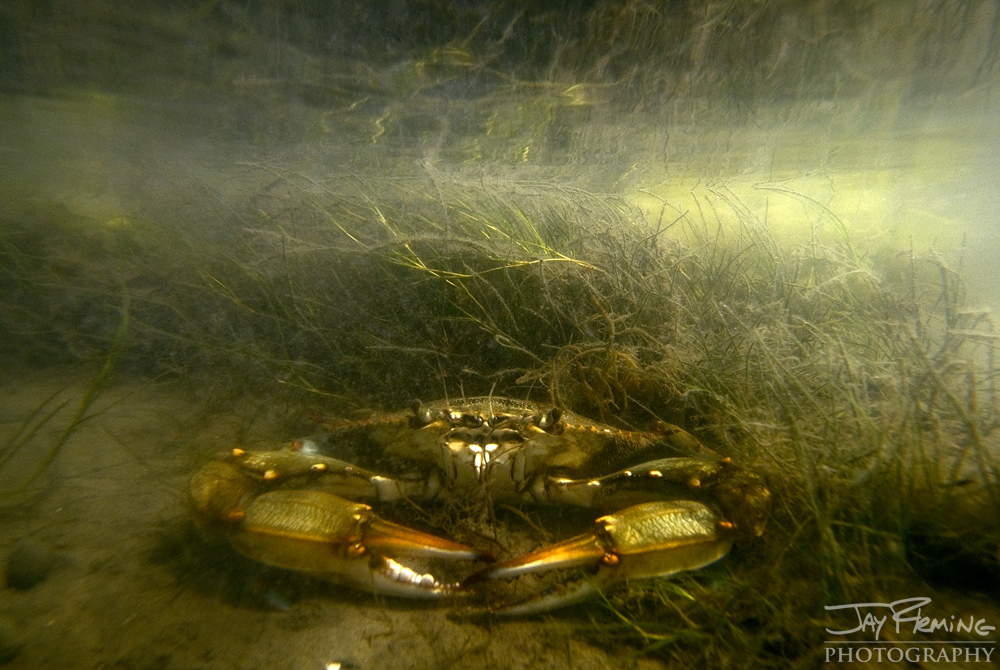 Underwater Portfolio © Jay Fleming 15.jpg