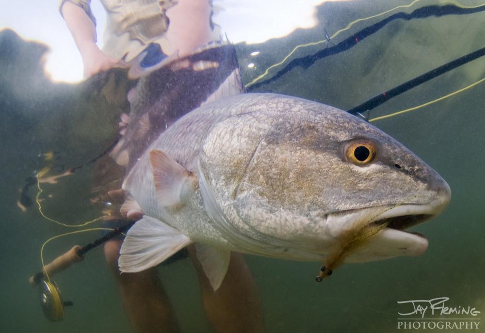 Underwater Portfolio © Jay Fleming 18.jpg