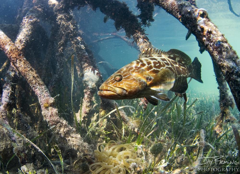 Underwater Portfolio © Jay Fleming 21.jpg