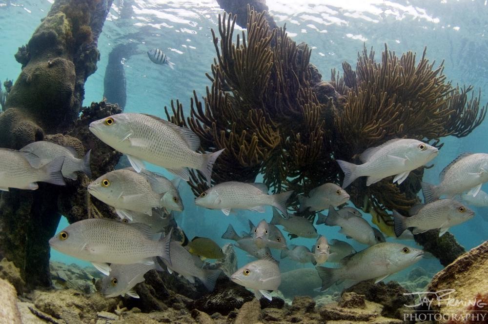 Underwater Portfolio © Jay Fleming 24.jpg