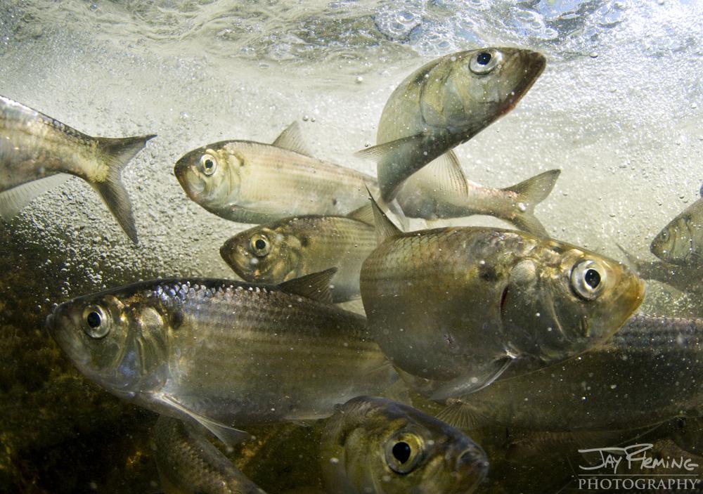 Underwater Portfolio © Jay Fleming 25.jpg