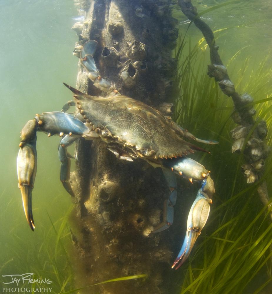 Underwater Portfolio © Jay Fleming 27.jpg