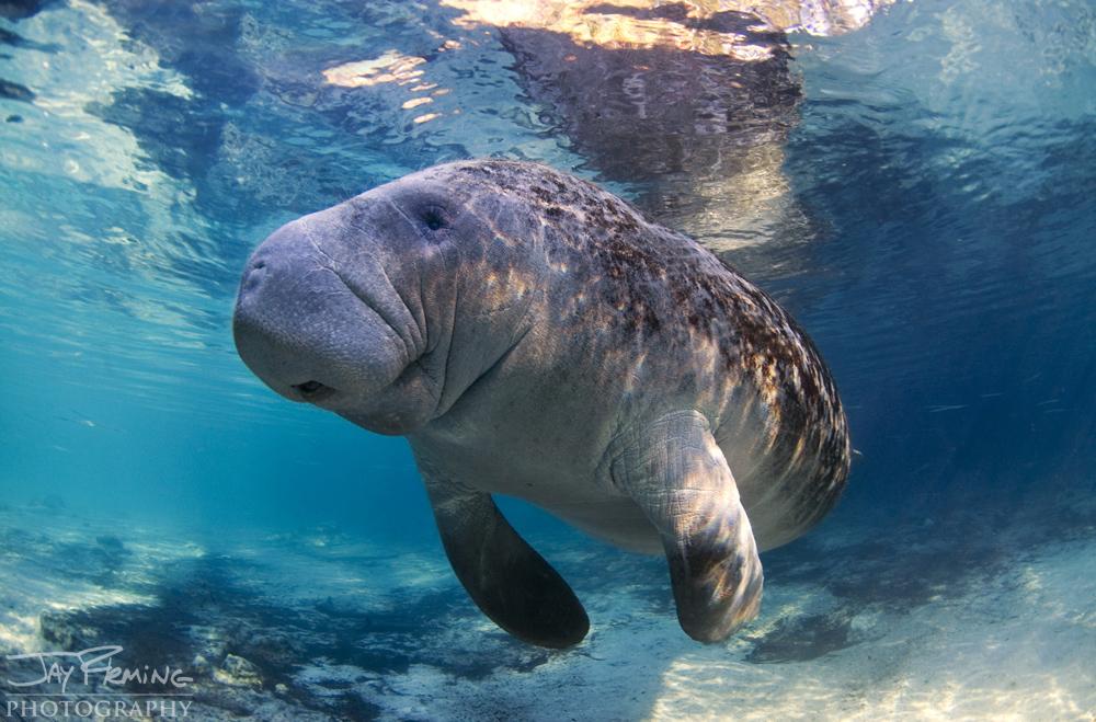 Underwater Portfolio © Jay Fleming 32.jpg