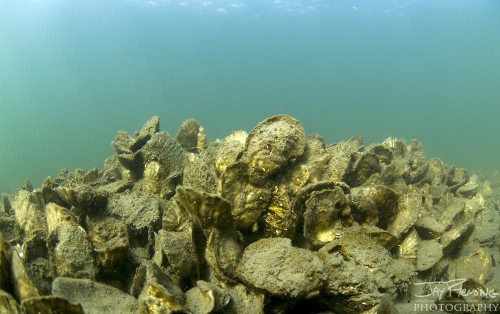Underwater Portfolio © Jay Fleming 35.jpg