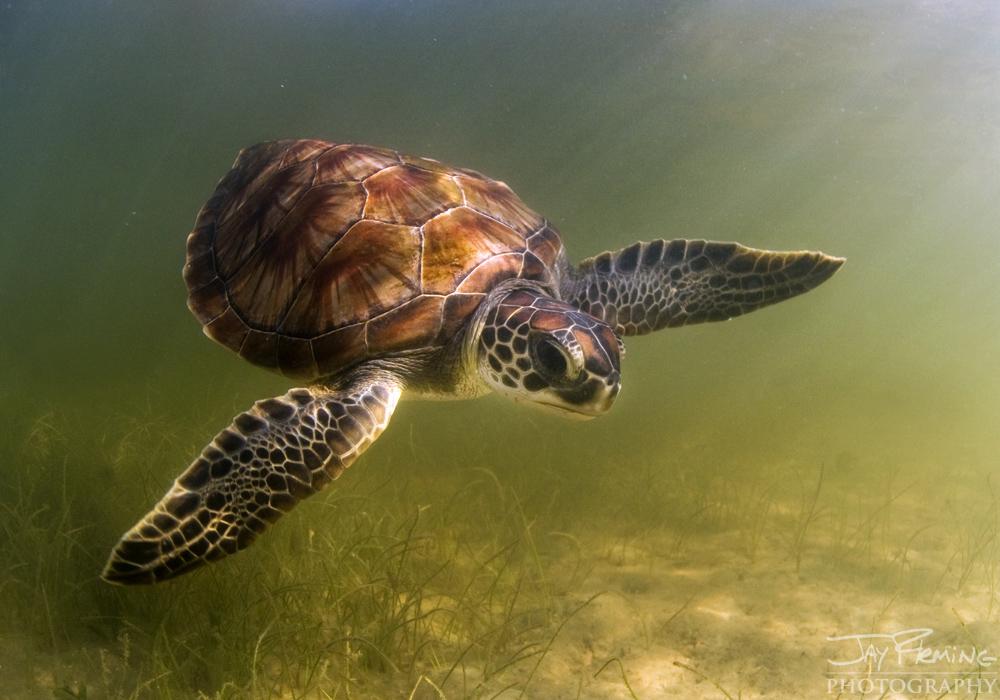 Underwater Portfolio © Jay Fleming 36.jpg