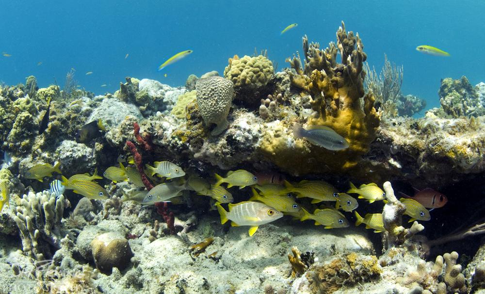 Underwater Portfolio © Jay Fleming 37.jpg
