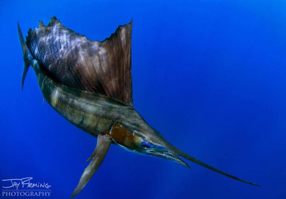 Underwater Portfolio © Jay Fleming 38.jpg