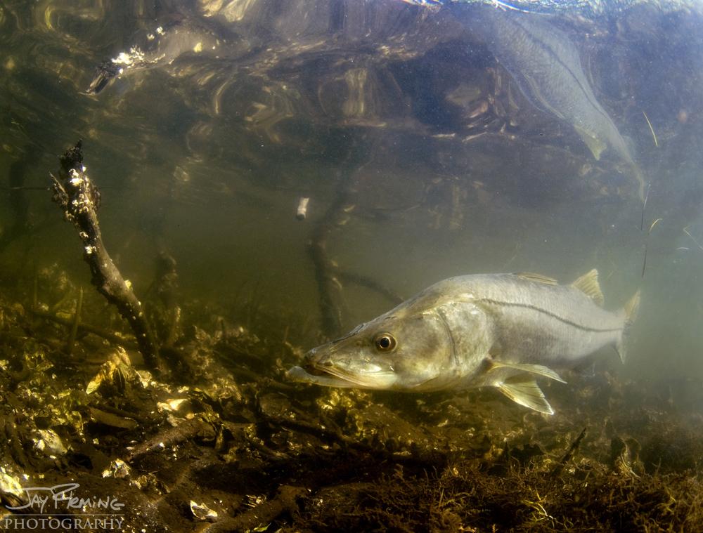 Underwater Portfolio © Jay Fleming 40.jpg
