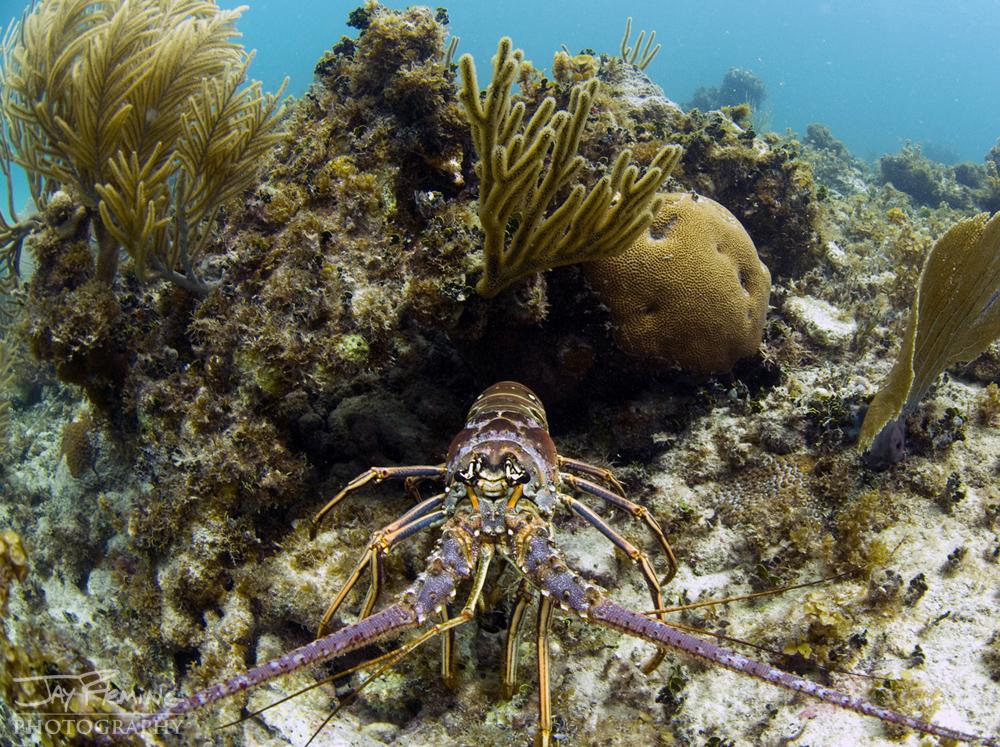 Underwater Portfolio © Jay Fleming 43.jpg