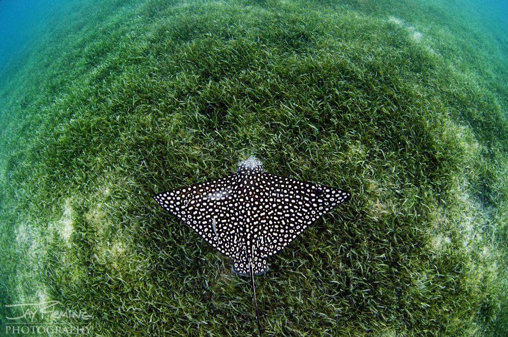 Underwater Portfolio © Jay Fleming 44.jpg