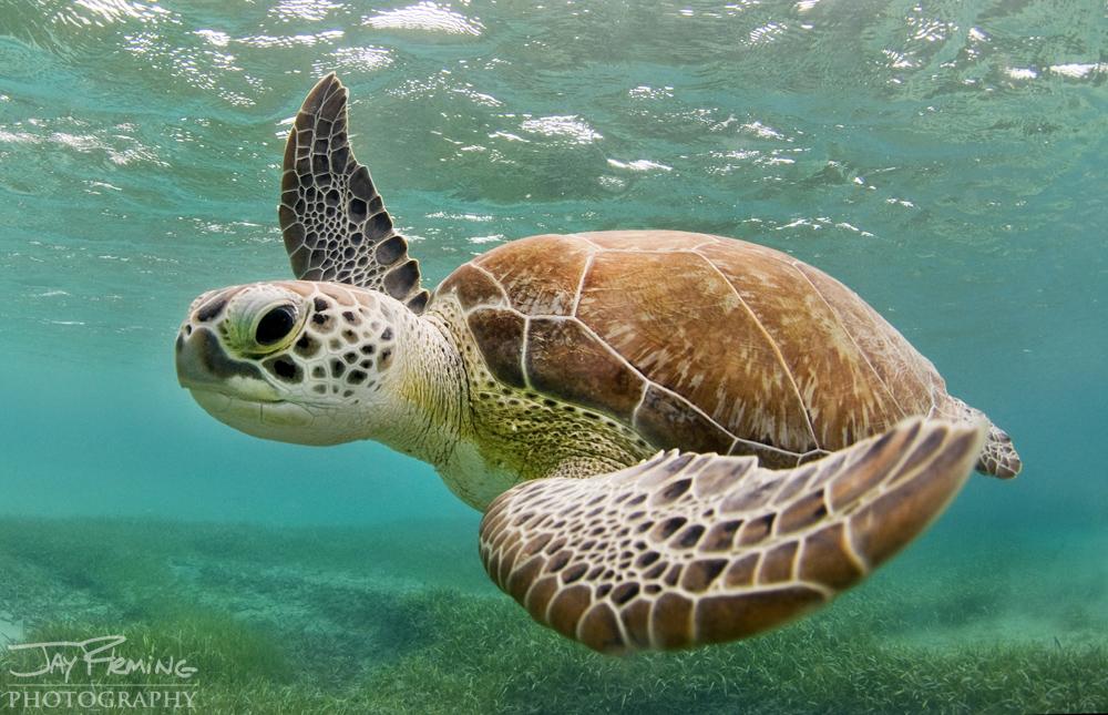 Underwater Portfolio © Jay Fleming 46.jpg