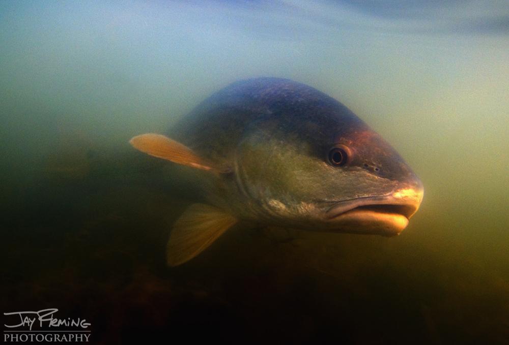 Underwater Portfolio © Jay Fleming 48.jpg