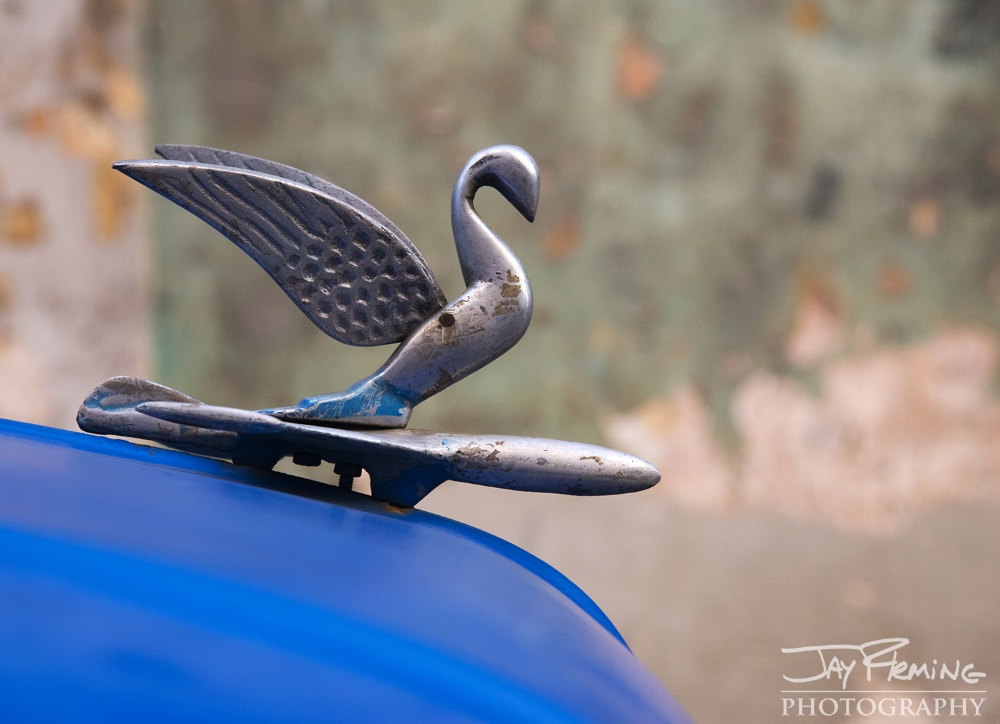 The packard swan hood ornament is commonly seen on 1950's era American cars in Havana