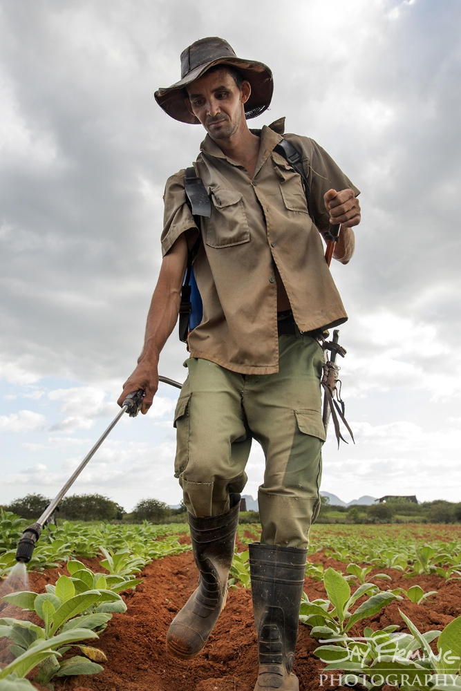 'Flaco', a farmer with land just outside of Puerto Esperanza, irrigates his tobacco plants.
